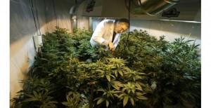 doctor marijuana ohio